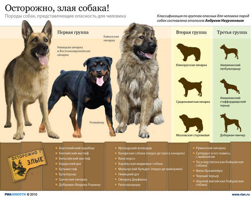 Опасные собаки