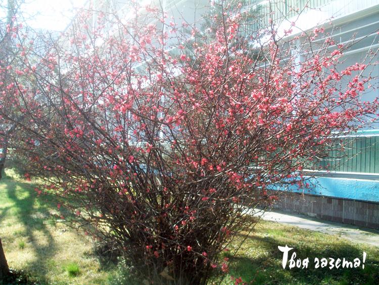 В Партените зацвели деревья и кустарники