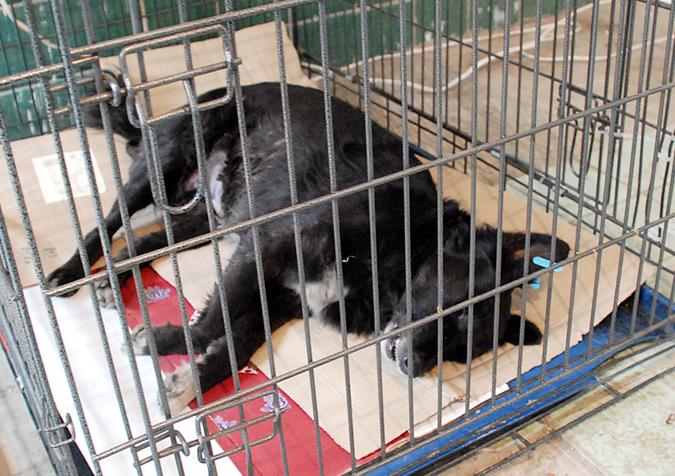 Уже неделю в Евпатории работает центр стерилизации бездомных животных