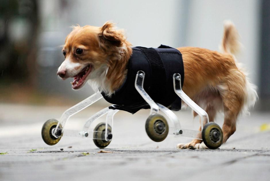 животное-инвалид 2