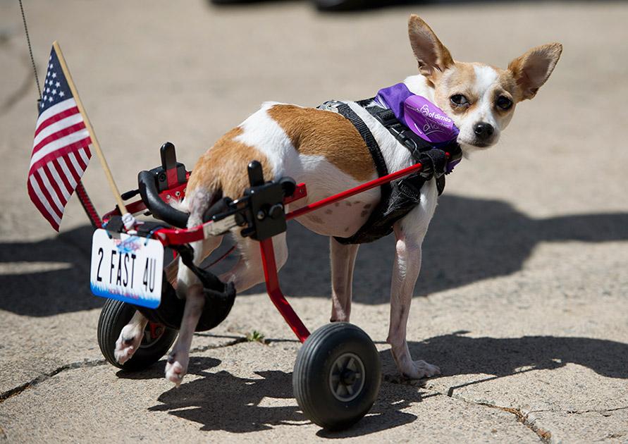 животное-инвалид1