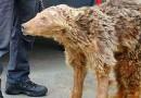 На российской таможне у крымского циркача отобрали медведицу (ФОТО)