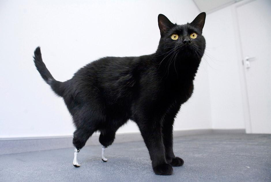 животное-инвалид 3
