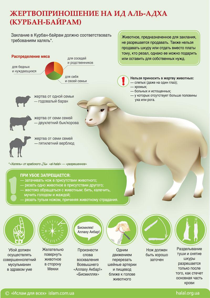 Инфографика Курбан-байрам
